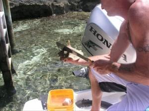 cj opening conch