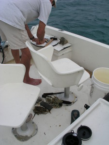 preparing bait for hand line fishing