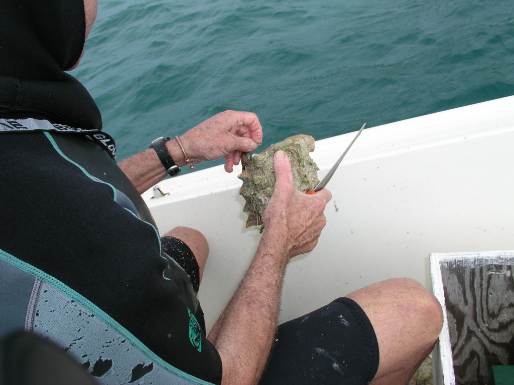 removing the conch from the shell